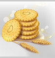 biscuit cookies or whole wheat cracker vector image