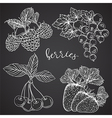 collection of berries on chalkboard vector image vector image