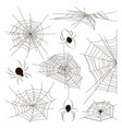 collection of spiders and webs vector image vector image
