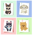 dogs with happy expression vector image
