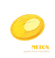 fresh melon isolated on white background vector image vector image