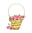 Wicker cherry basket vector image