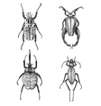 big set insects bugs beetles and bees many vector image vector image