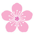 cherry blossom flower vector image