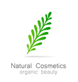 natural cosmetics vector image