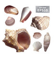set of realistic seashells vector image