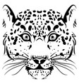 black and white sketch leopard face vector image