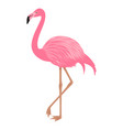flamingo isolated on the white background vector image vector image