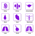 icons internal human organs vector image