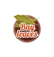 Bay Leaves Spice vector image vector image