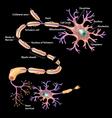Neuron Cell vector image vector image