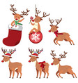 reindeers and christmas ornaments vector image