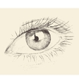 Eye Sketch Hand Drawn Engraved vector image