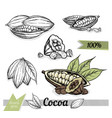 cocoa isolated on white background vector image vector image