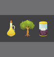 set olives fruit olive oil bottle tree vector image vector image