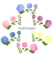 summer greeting card with blooming hydrangea vector image vector image