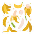 yellow banana colorful set exotic tropical fruit vector image vector image