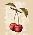 cherry hand drawing vintage engraving vector image vector image