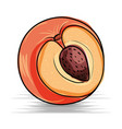 kiwi fresh and healthy fruit vector image vector image
