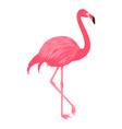 flamingo isolated on the white background vector image