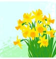 card with daffodils on textured background vector image vector image