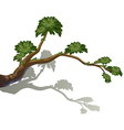 A branch of a tree vector image vector image