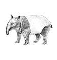 hand drawn black and white tapir vector image