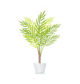 indoor plant with big leaves in white plastic pot vector image vector image