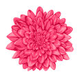 pink dahlia with the effect of a watercolor vector image vector image