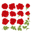 red roses hand drawn flowers and vector image vector image