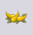 ripe yellow pears and leaves vector image vector image