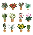set of flowers with different vector image vector image