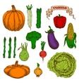 Autumnal harvest vegetables vintage sketch icons vector image vector image
