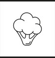 cauliflower simple icon on white background vector image vector image