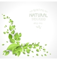 Decorative corner with green leaves vector image vector image
