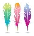 color bright decorative feathers birds vector image vector image