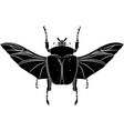 goliathus albosignatus beetle vector image vector image