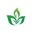 leaf eco logo vector image vector image