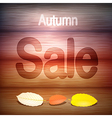 Autumn Sale title on wood with leaves vector image vector image