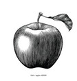 gala apple fruit drawing vintage clip art vector image