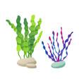 seaweed foliage marine set vector image