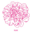 floral sketch vector image