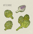 artichoke set hand drawn botanical isolated and vector image vector image