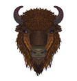 european brown zubr buffalo bison animal isolated vector image vector image
