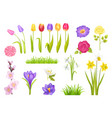 flowers collection poster vector image vector image