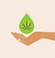 hand holding oil drop with a marijuana leaf vector image