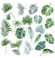 big collection hand drawn colored palm leaves vector image vector image