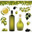 big set with branch olives and with white vector image vector image