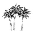 ink sketch of palm trees vector image vector image