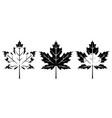 set monochrome maple leaves vector image vector image